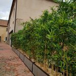 Planta bambú