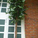 Arbol bambú